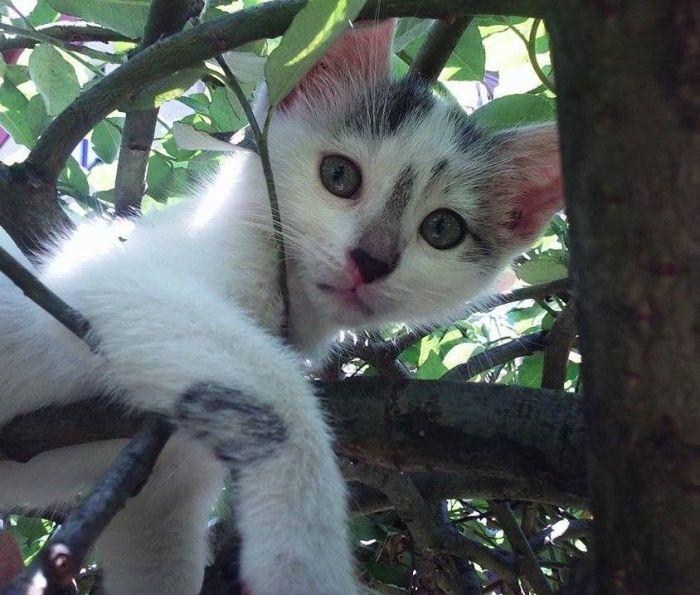 Kotuś