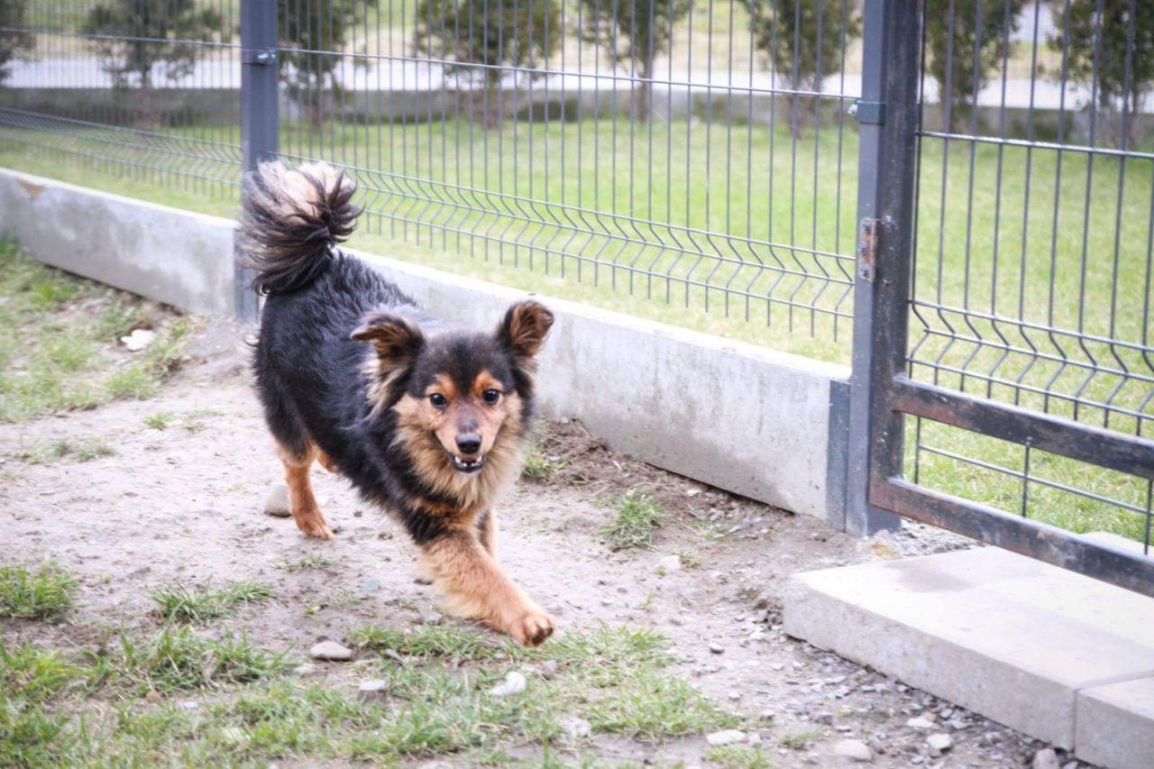 Łapka śliczny psiak szuka domu !!!