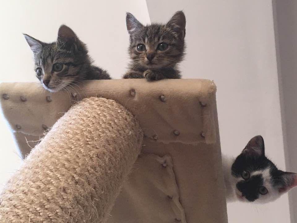 Kocie bliźniaki i przymilas
