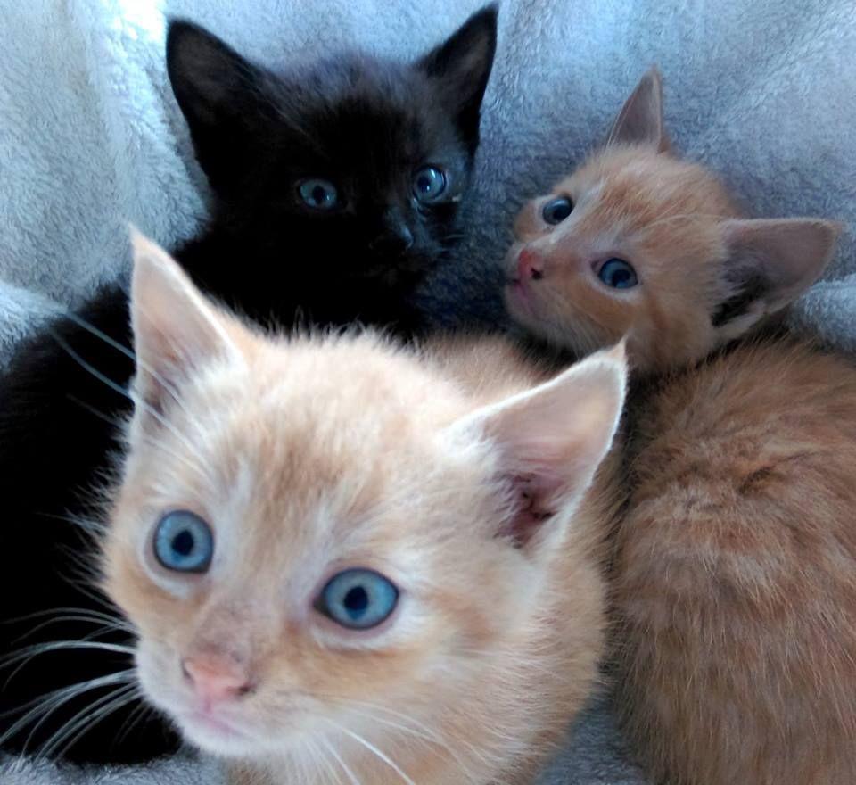 Koty ,kotki i kociaki