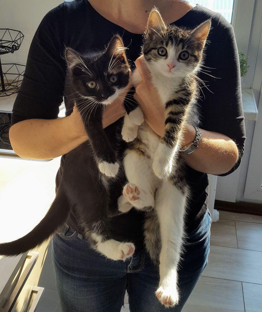 Puchate, prześliczne kociaki
