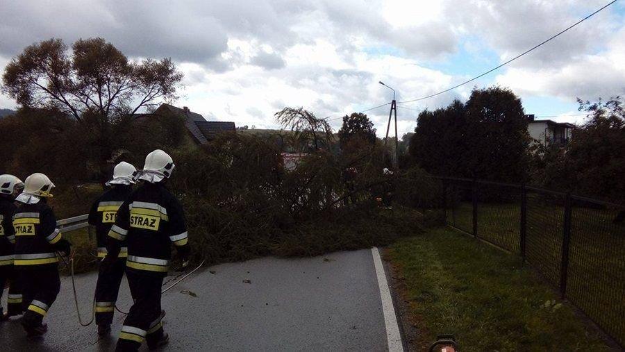 Drzewa Opadły Na Dom. Wina Halnego