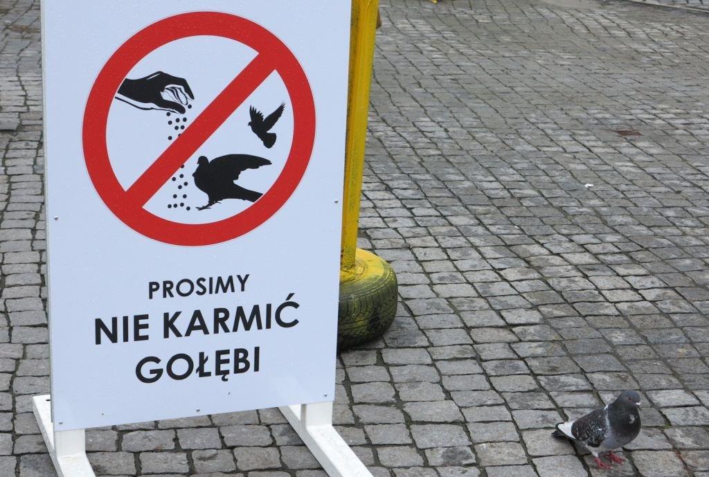 Miasto kontra karmiący gołębie
