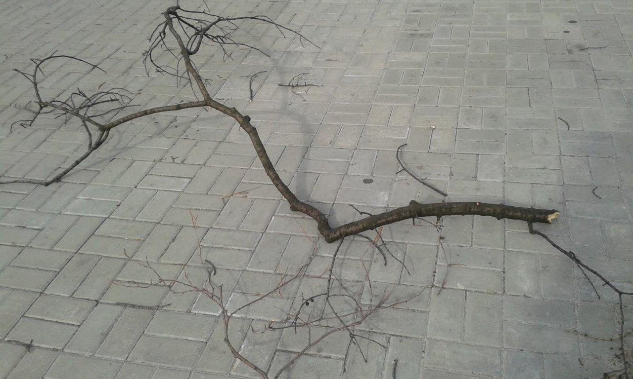 Wiatr Uszkodził Dachy I Poprzewracał Drzewa