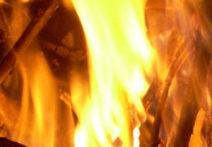 Duży pożar młodnika