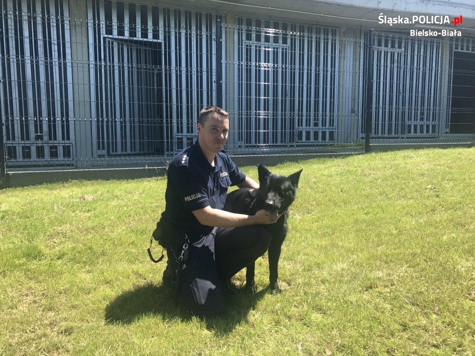 Pies odnalazł przestępcę