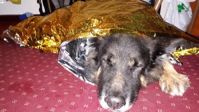 Akcja Gopr: Ratowano Psa