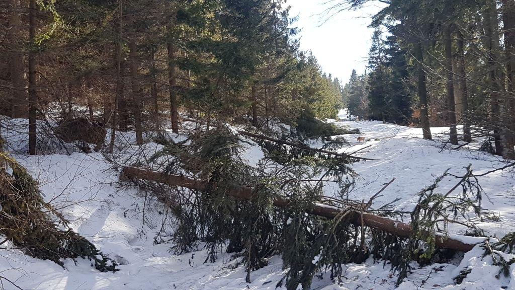 Połamane drzewa na Szyndzielni