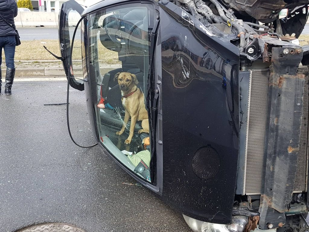 Pies utknął w samochodzie