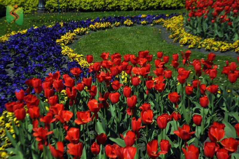40 Tysięcy Kwiatów. Będzie Też Niespodzianka