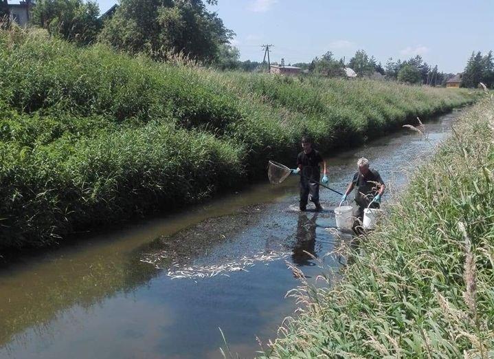 Wyłowili z rzeki setki śniętych ryb