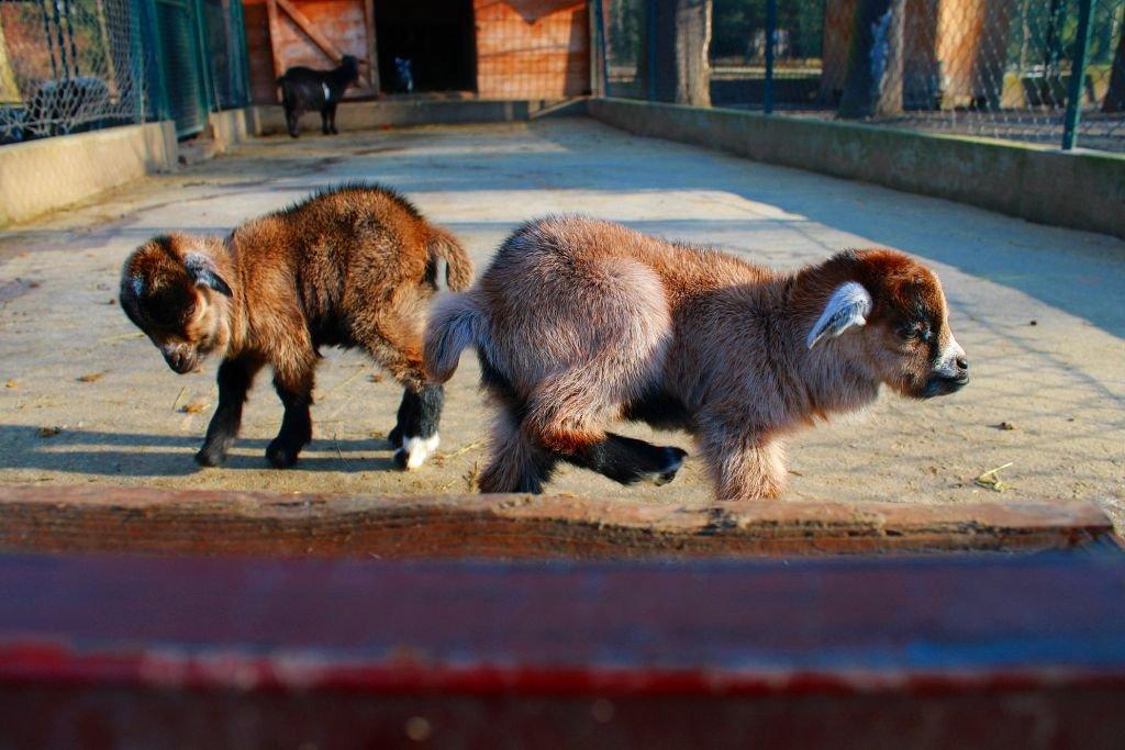 Nowi Mieszkańcy Zoo