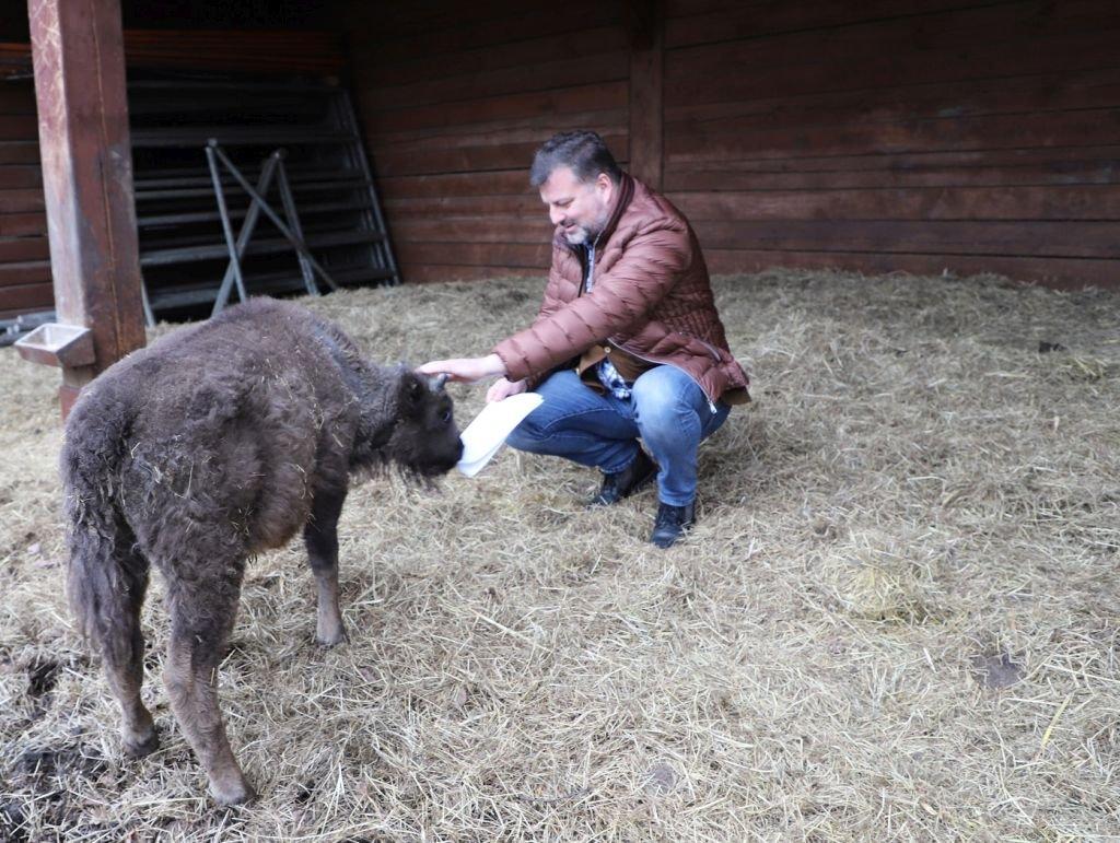 Nie chciała go mama, nie chciało stado. Adoptowało PIK