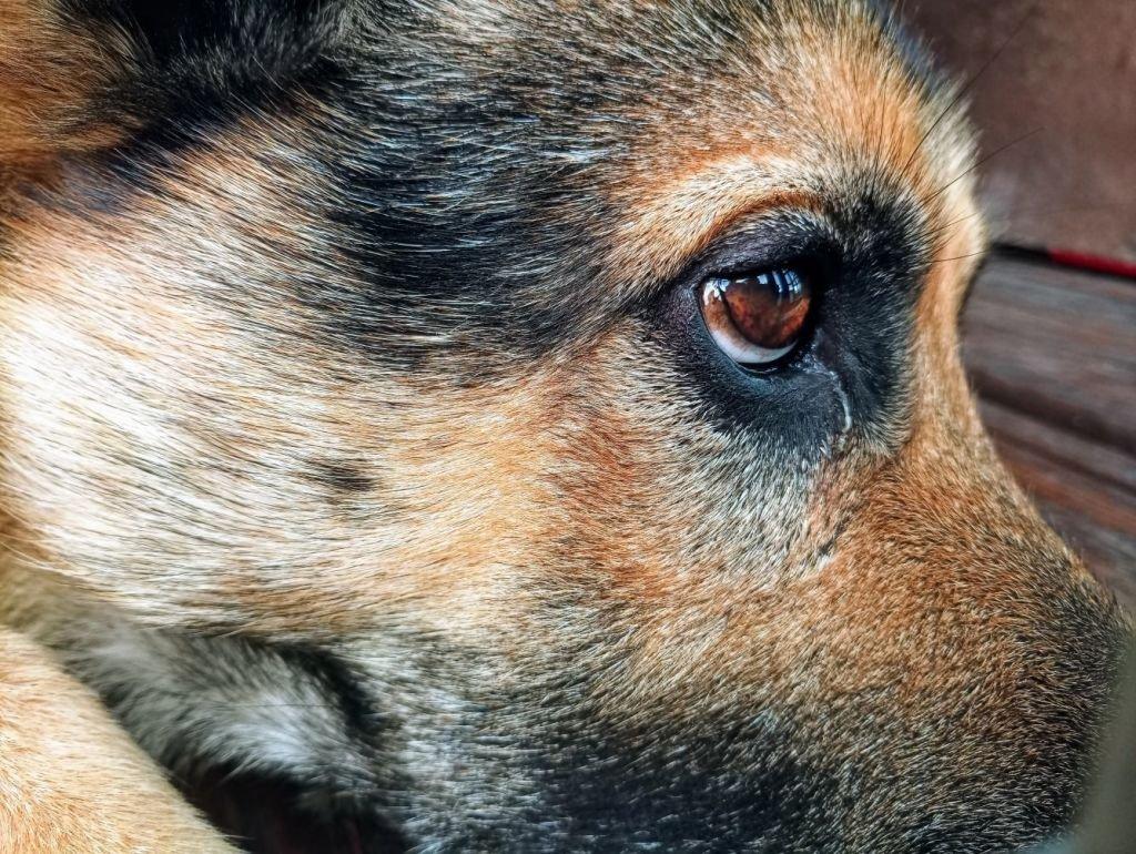 Te Psy Przeżyły Piekło. Tutaj Będą Czekać Na Dom