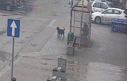 Pies Pogryzł Inne Zwierzę I Kobietę. Policja Szuka Właściciela
