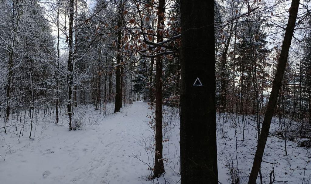 Trójkąty Na Drzewach. O Co Chodzi?