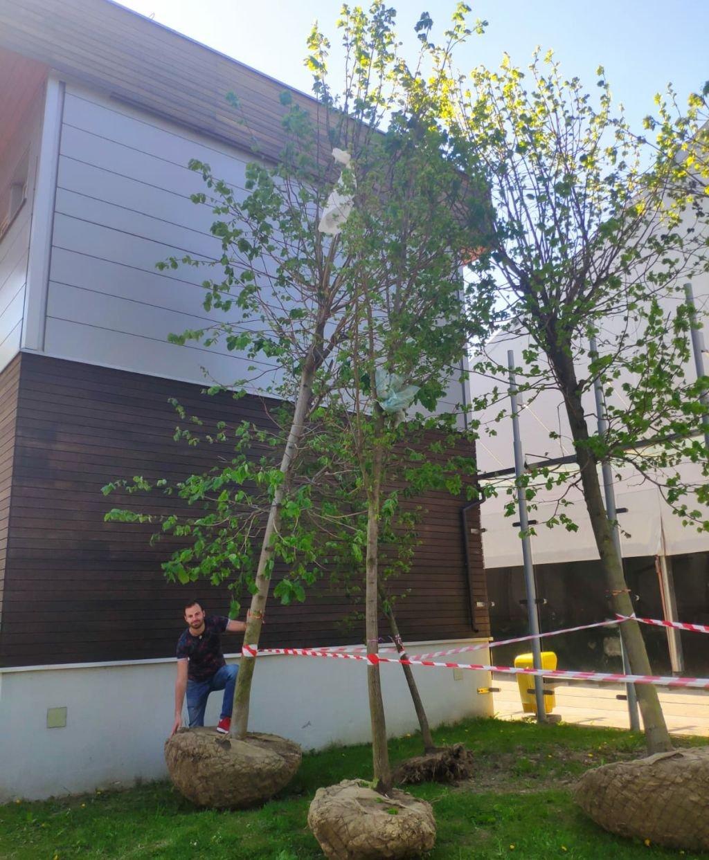 Duże Drzewa Posadzono. To Nie Koniec
