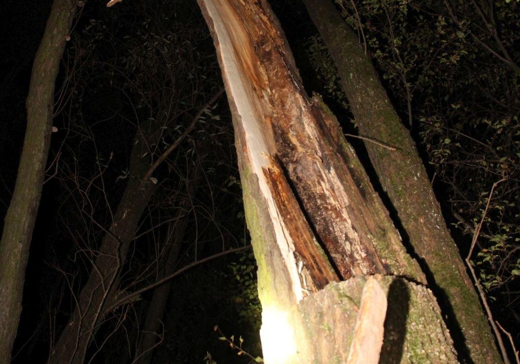 Wypadek Przy Wycince Drzewa. Nie Żyje 62-Latek